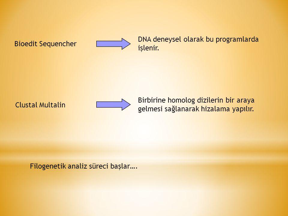 Bioedit Sequencher DNA deneysel olarak bu programlarda işlenir.