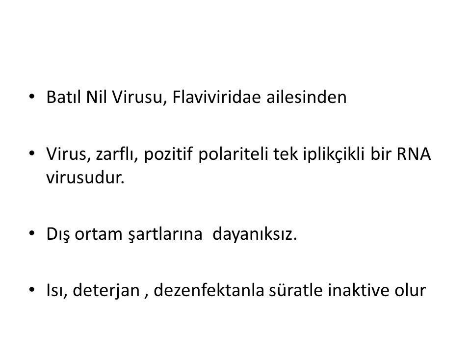 Batıl Nil Virusu, Flaviviridae ailesinden Virus, zarflı, pozitif polariteli tek iplikçikli bir RNA virusudur. Dış ortam şartlarına dayanıksız. Isı, de