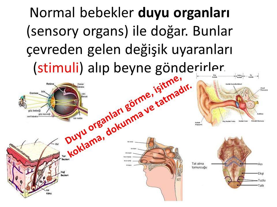 Normal bebekler duyu organları (sensory organs) ile doğar. Bunlar çevreden gelen değişik uyaranları (stimuli) alıp beyne gönderirler. Duyu organları g