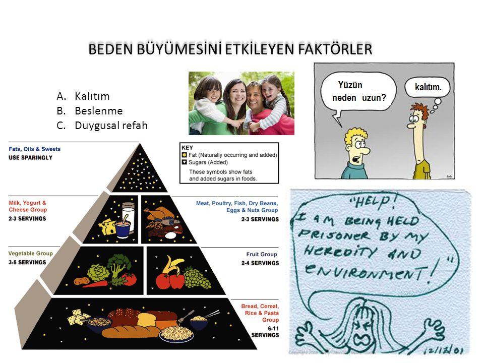 BEDEN BÜYÜMESİNİ ETKİLEYEN FAKTÖRLER A.Kalıtım B.Beslenme C.Duygusal refah