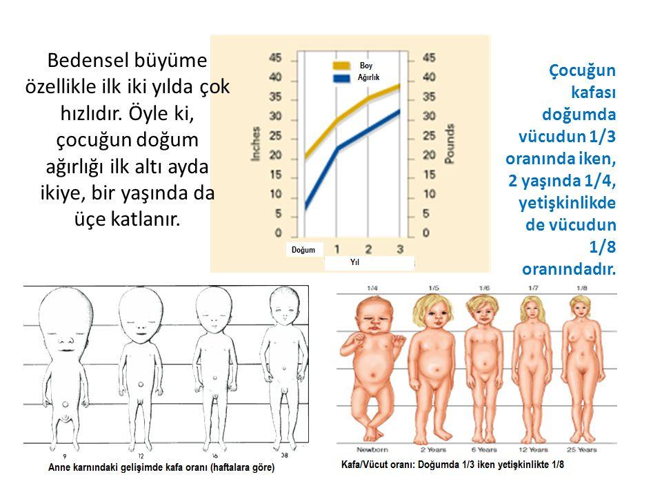 Bedensel büyüme özellikle ilk iki yılda çok hızlıdır. Öyle ki, çocuğun doğum ağırlığı ilk altı ayda ikiye, bir yaşında da üçe katlanır. Çocuğun kafası
