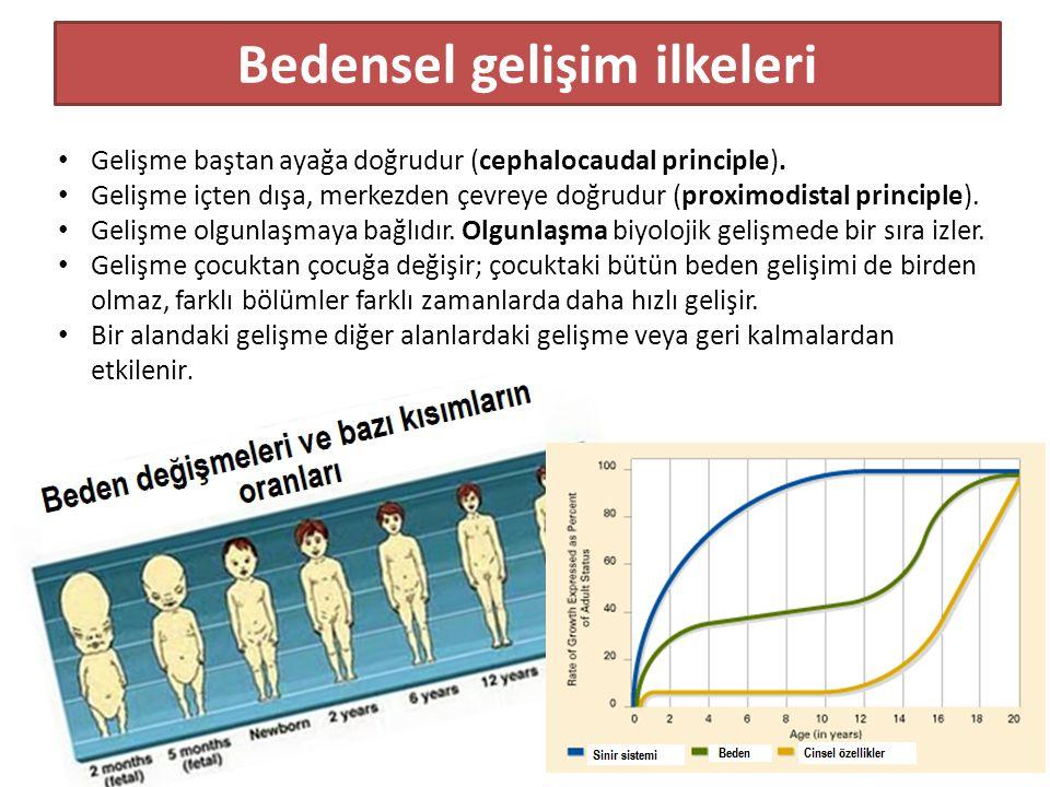 Bedensel gelişim ilkeleri Gelişme baştan ayağa doğrudur (cephalocaudal principle). Gelişme içten dışa, merkezden çevreye doğrudur (proximodistal princ