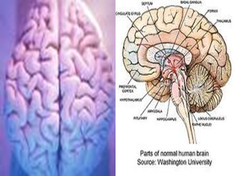 5.İLKE:Örüntülemede duygular çok önemlidir.Duygusal ve bilişsel süreçler birbirinden ayrılmaz.
