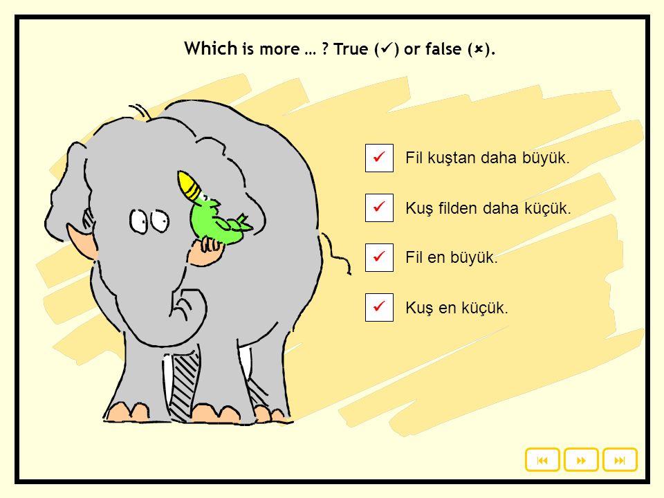 Fil kuştan daha büyük. Kuş filden daha küçük. Which is more … ? True ( ) or false (  ). Click to see the answers. Fil en büyük. Kuş en küçük.  1 2