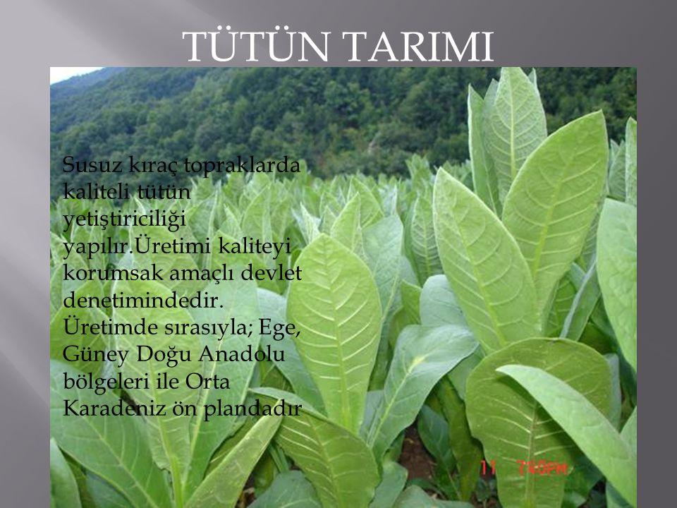 TÜTÜN TARIMI Susuz kıraç topraklarda kaliteli tütün yetiştiriciliği yapılır.Üretimi kaliteyi korumsak amaçlı devlet denetimindedir.