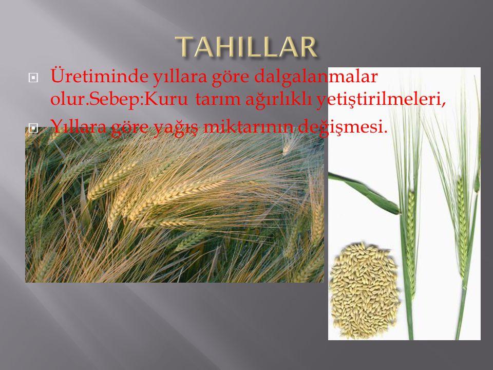 Soğuk sevmez.Yüksek sıcaklık ve bol su ister.%88 Akdeniz kıyılarında yetiştirilir.