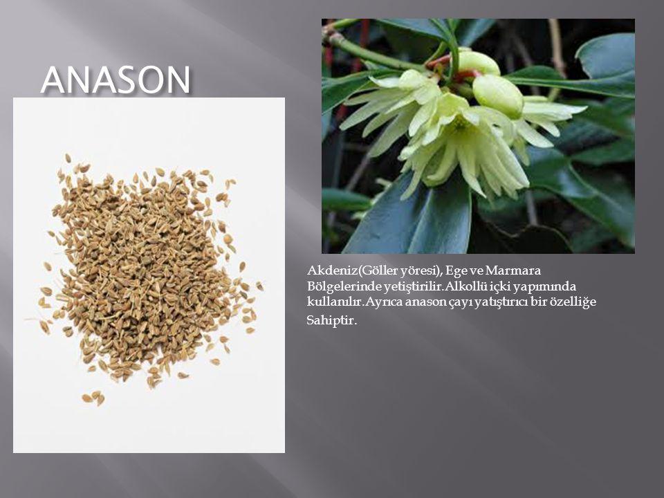 ANASON Akdeniz(Göller yöresi), Ege ve Marmara Bölgelerinde yetiştirilir.Alkollü içki yapımında kullanılır.Ayrıca anason çayı yatıştırıcı bir özelliğe Sahiptir.