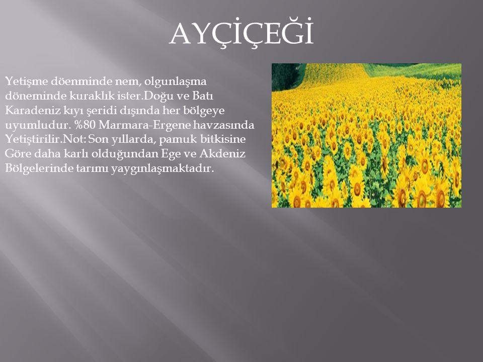 AYÇİÇEĞİ Yetişme döenminde nem, olgunlaşma döneminde kuraklık ister.Doğu ve Batı Karadeniz kıyı şeridi dışında her bölgeye uyumludur.