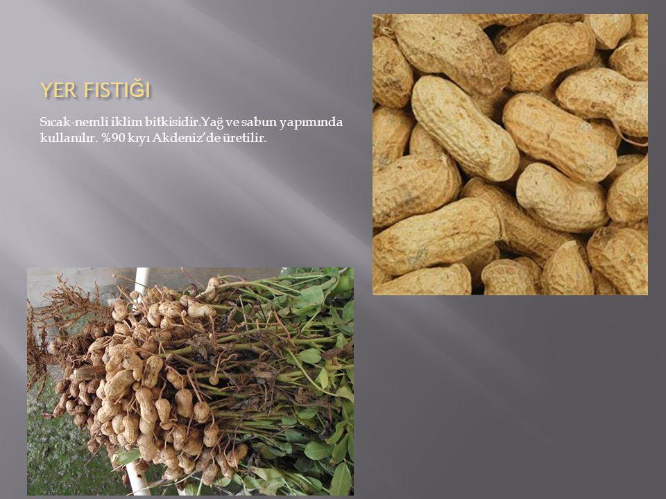 YER FISTI Ğ I Sıcak-nemli iklim bitkisidir.Yağ ve sabun yapımında kullanılır.