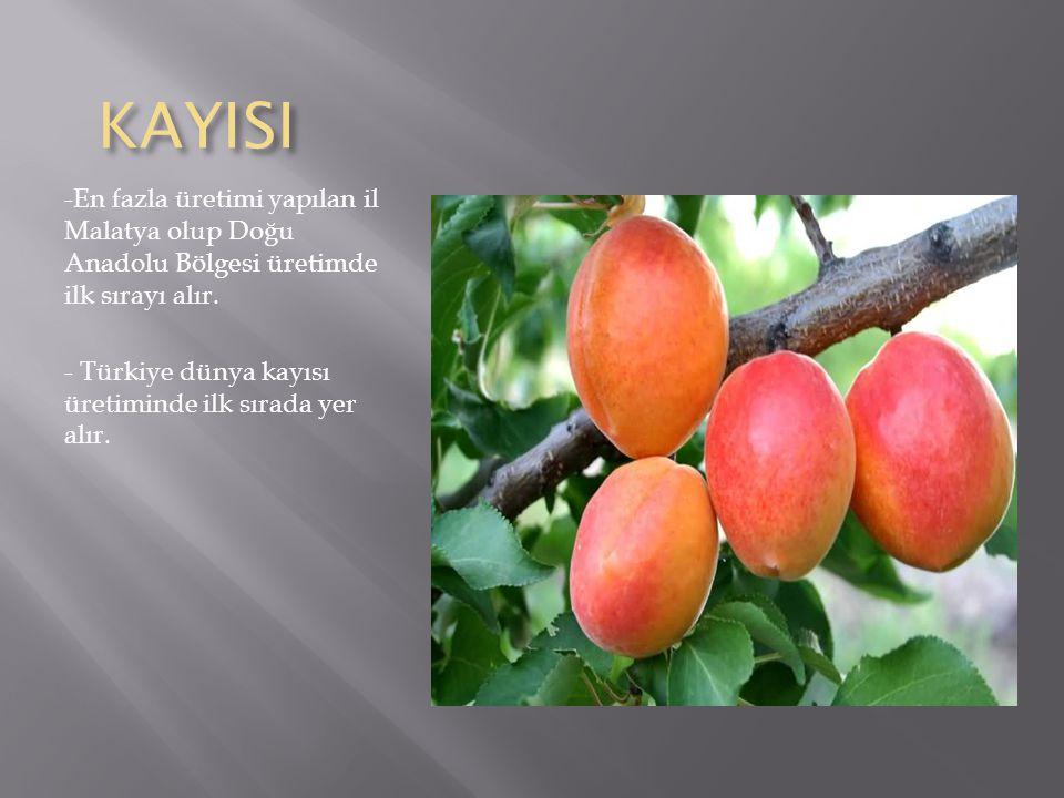 KAYISI KAYISI -En fazla üretimi yapılan il Malatya olup Doğu Anadolu Bölgesi üretimde ilk sırayı alır.