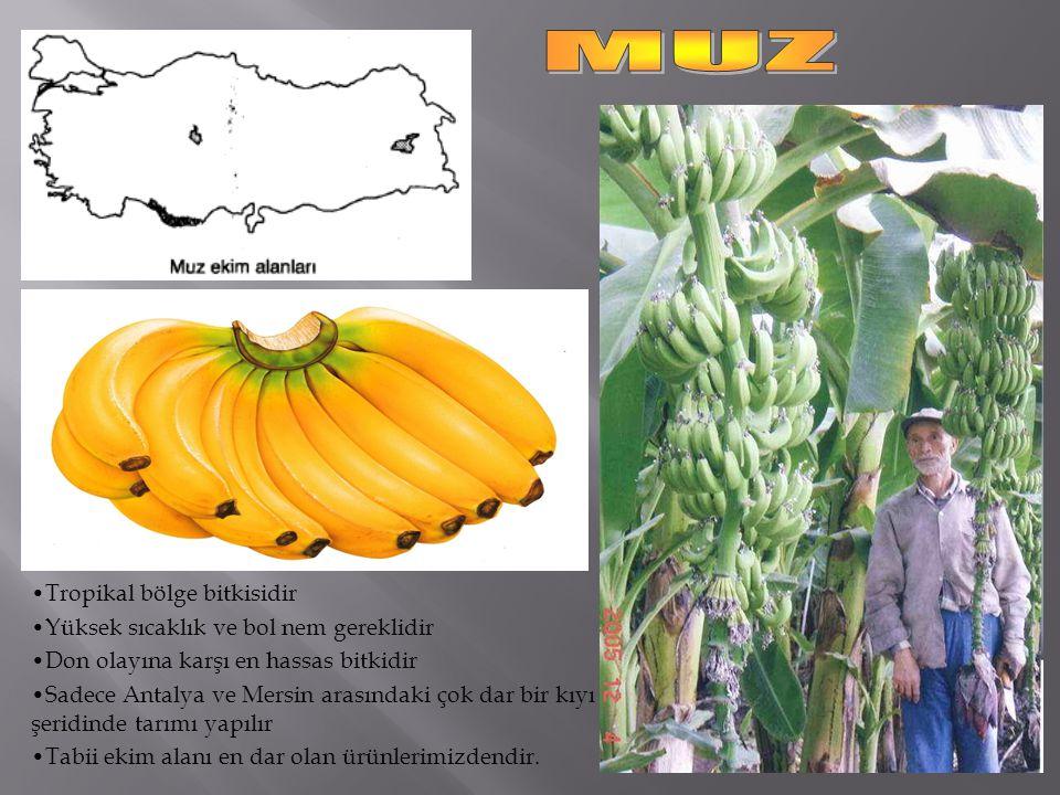 Tropikal bölge bitkisidir Yüksek sıcaklık ve bol nem gereklidir Don olayına karşı en hassas bitkidir Sadece Antalya ve Mersin arasındaki çok dar bir kıyı şeridinde tarımı yapılır Tabii ekim alanı en dar olan ürünlerimizdendir.