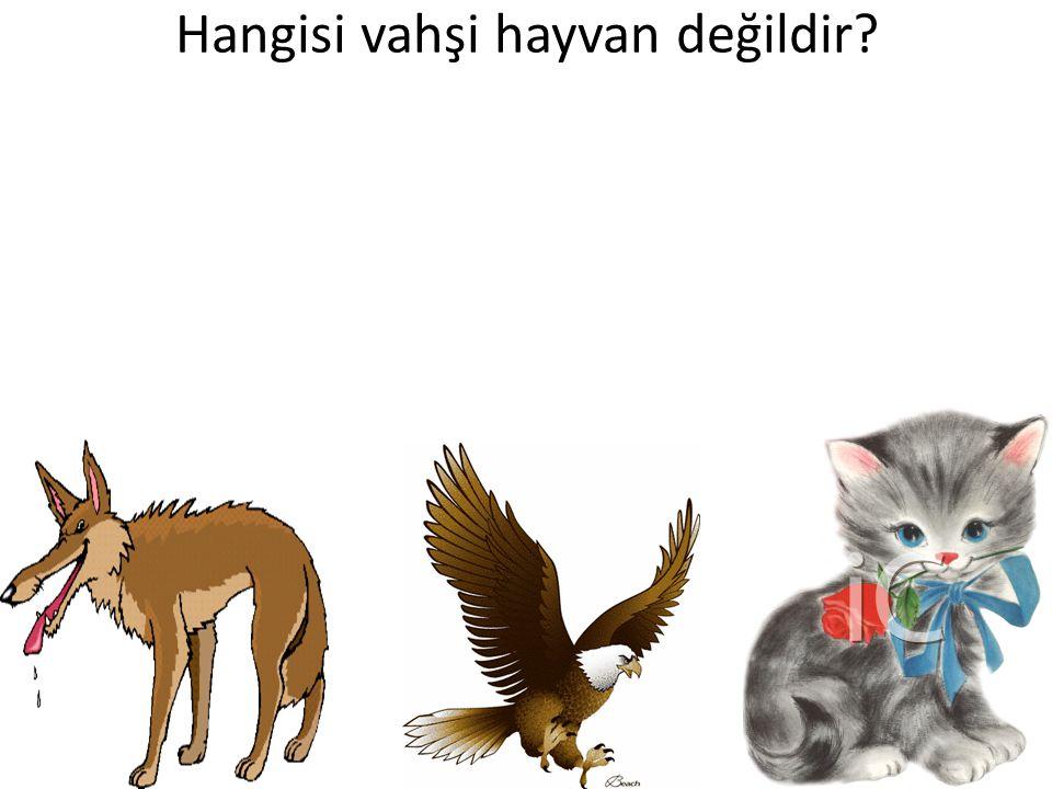 Hangisi vahşi hayvan değildir?
