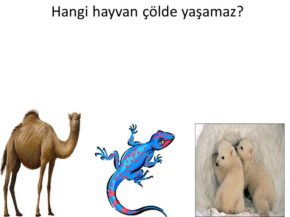 Hangi hayvan çölde yaşamaz?