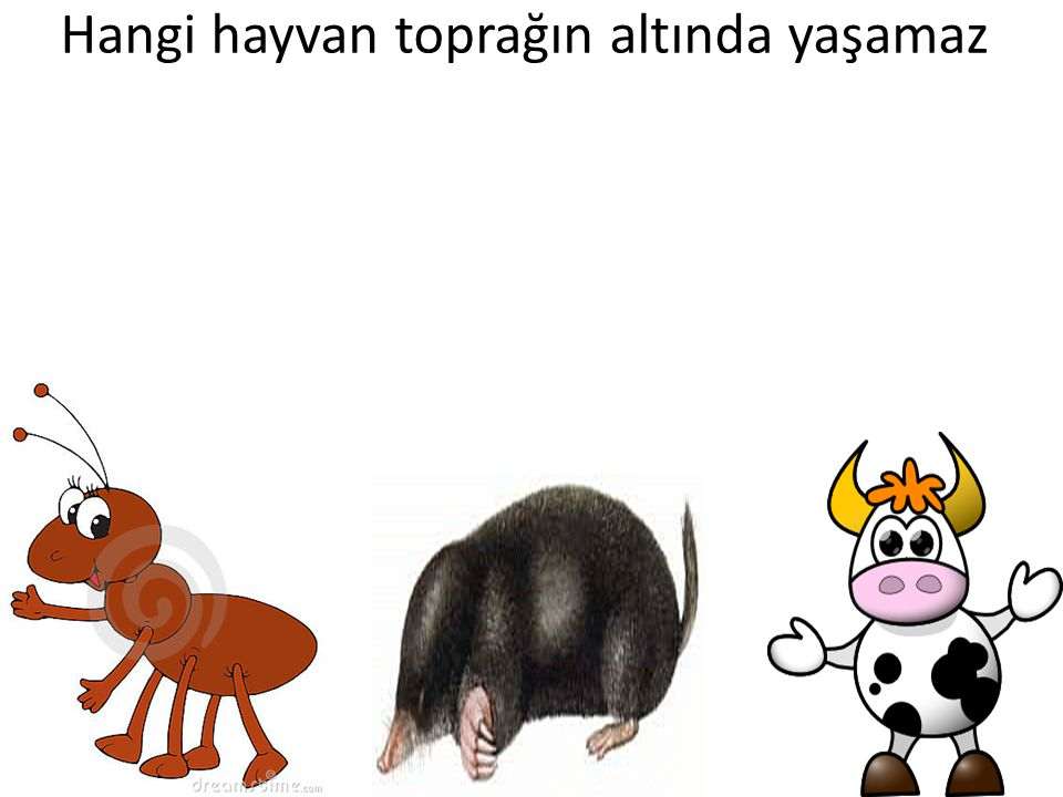 Hangi hayvan toprağın altında yaşamaz