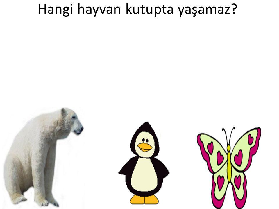 Hangi hayvan kutupta yaşamaz?