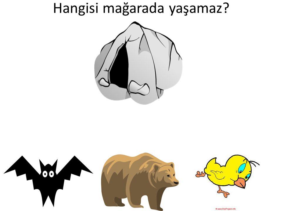 Hangisi mağarada yaşamaz?