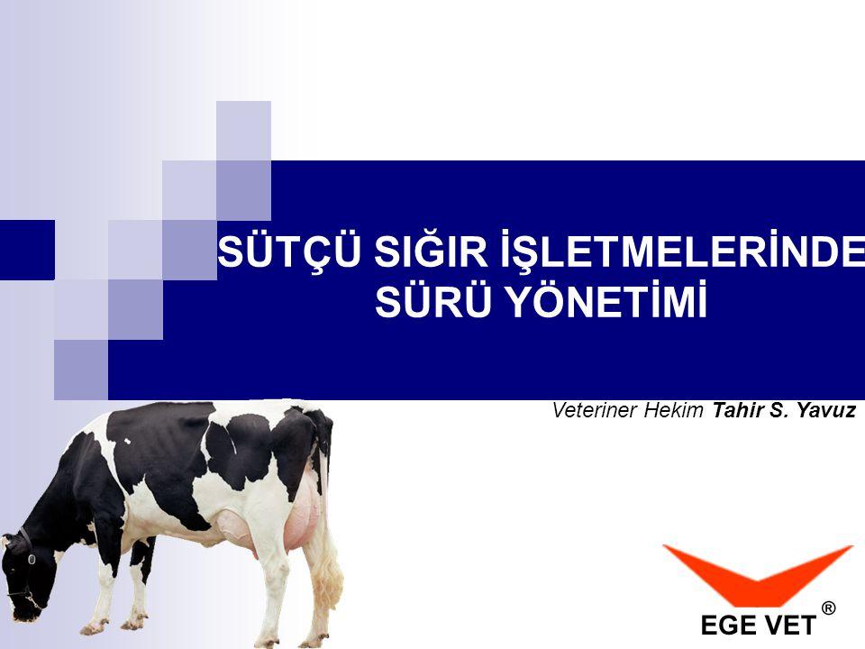 Holstein Irkı Düvelerde : Güç doğum oranı ortalama: * %9 oranındadır.