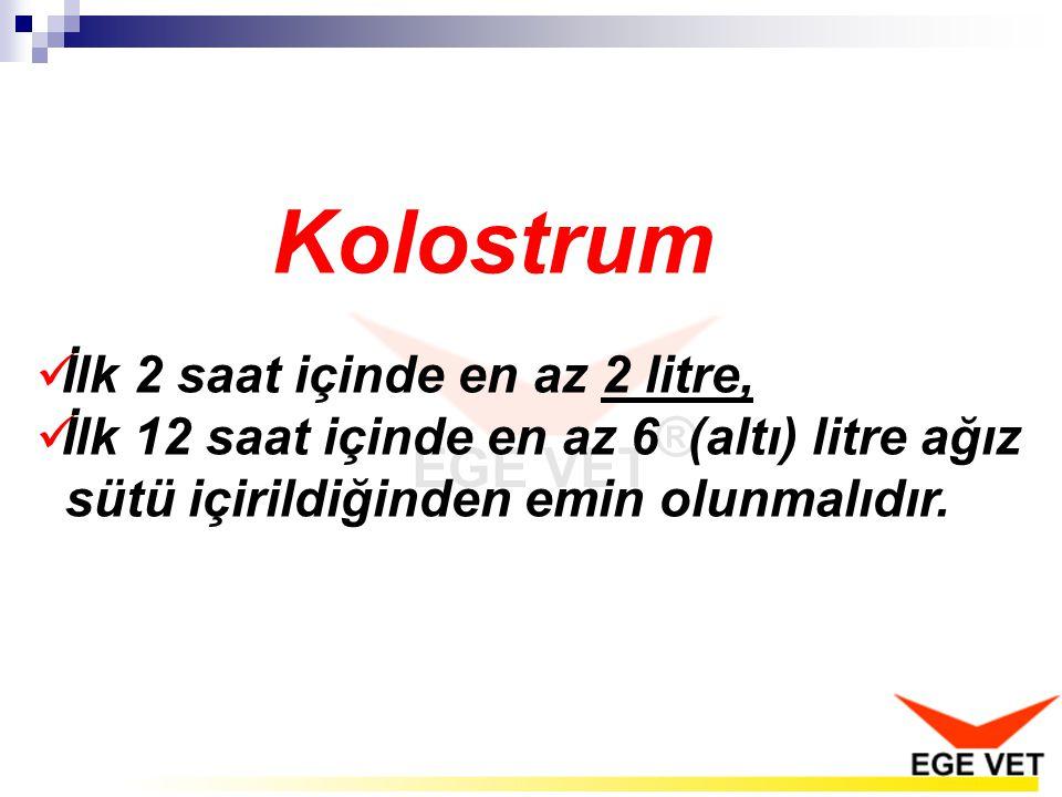 Kolostrum İlk 2 saat içinde en az 2 litre, İlk 12 saat içinde en az 6 (altı) litre ağız sütü içirildiğinden emin olunmalıdır.