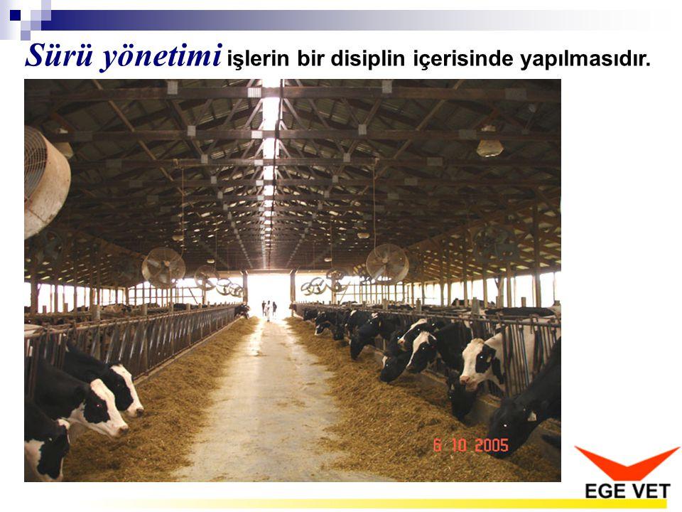 7.Sürünün ortalama süt miktarı nedir.8.Bir buzağı için kullanılan payet sayısı kaçtır.
