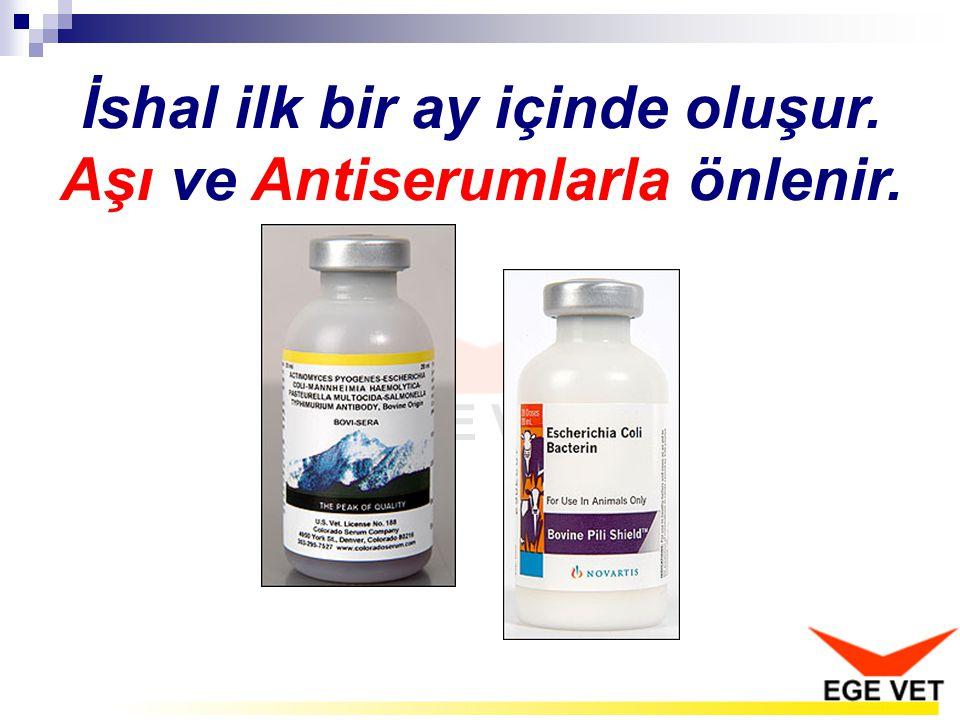 İshal ilk bir ay içinde oluşur. Aşı ve Antiserumlarla önlenir.