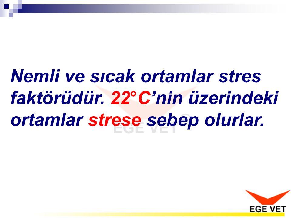 Nemli ve sıcak ortamlar stres faktörüdür. 22°C'nin üzerindeki ortamlar strese sebep olurlar.