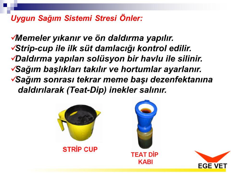 Uygun Sağım Sistemi Stresi Önler: Memeler yıkanır ve ön daldırma yapılır. Strip-cup ile ilk süt damlacığı kontrol edilir. Daldırma yapılan solüsyon bi