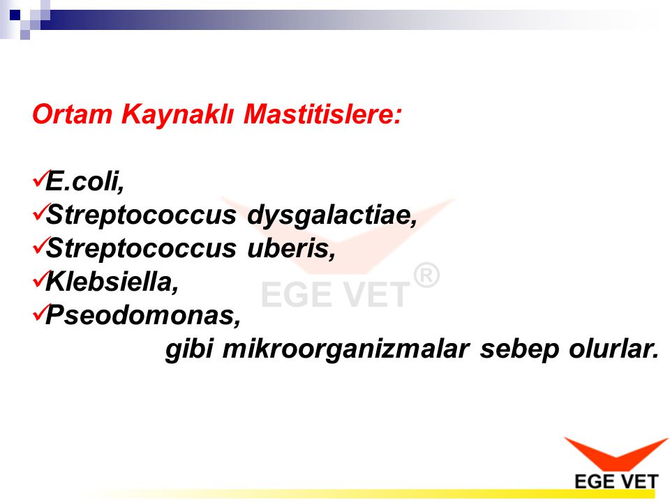 Ortam Kaynaklı Mastitislere: E.coli, Streptococcus dysgalactiae, Streptococcus uberis, Klebsiella, Pseodomonas, gibi mikroorganizmalar sebep olurlar.