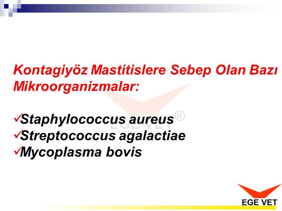 Kontagiyöz Mastitislere Sebep Olan Bazı Mikroorganizmalar: Staphylococcus aureus Streptococcus agalactiae Mycoplasma bovis
