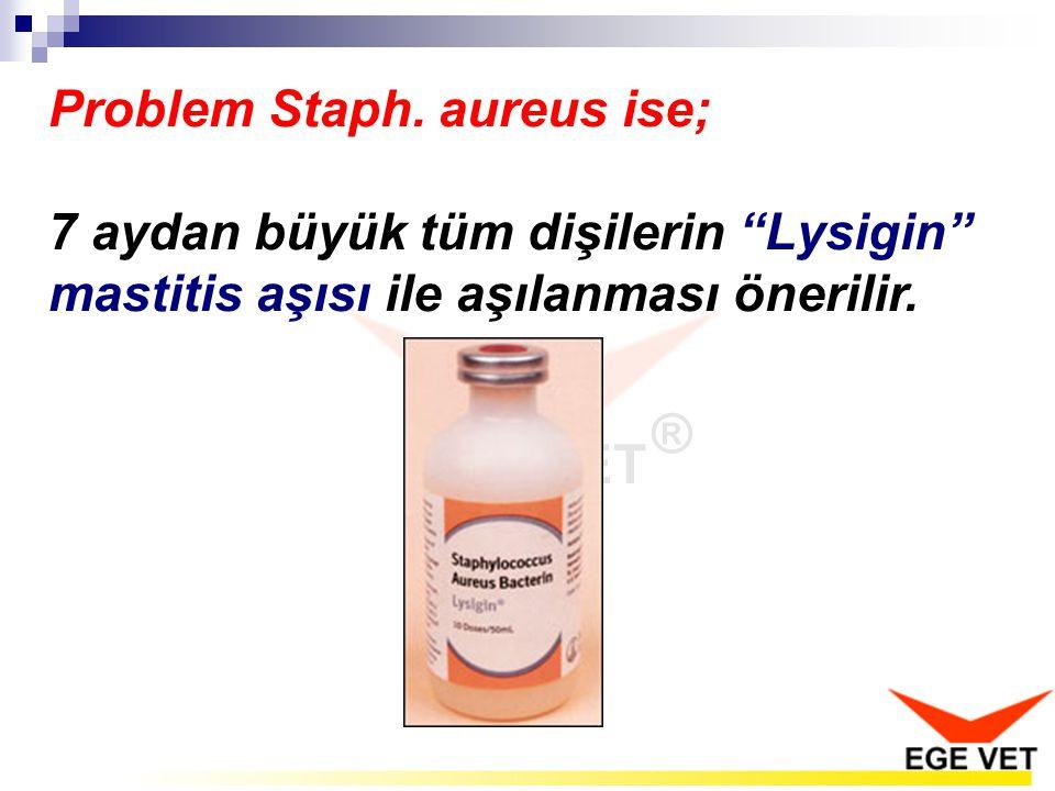 """Problem Staph. aureus ise; 7 aydan büyük tüm dişilerin """"Lysigin"""" mastitis aşısı ile aşılanması önerilir."""
