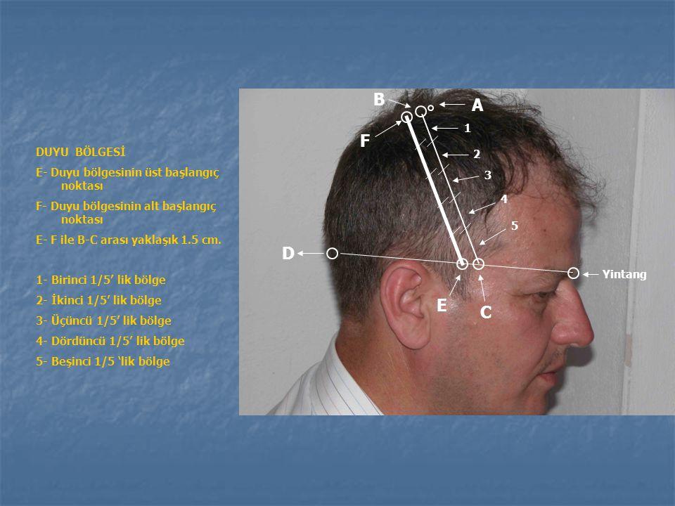 Motorik bölgenin bölümleri 3. Alt grup =En üstten itibaren 4/5 ve 5/5'lik kısım: Karşı taraf boyun ve yüz kaslarını, çiğneme ve yutkunma hareketleriyl