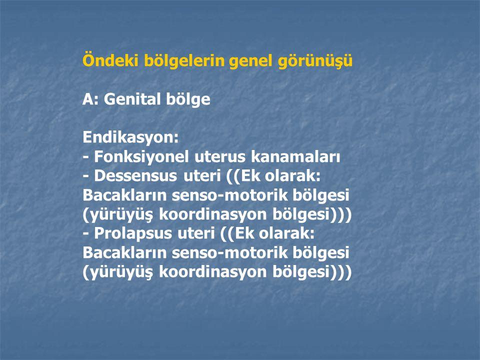 Öndeki bölgelerin genel görünüşü A: Genital bölge (Uzunluğu 2 cm) B: Mide-Karaciğer- Safrakesesi bölgesi (Uzunluğu 2 cm) C: Göğüs bölgesi (Uzunluğu 4