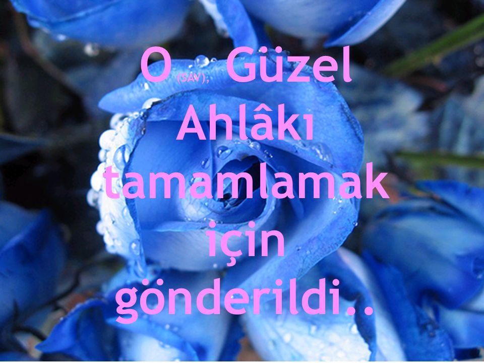 Ey Kupkuru Çölleri Cennete Çeviren Gül; Gel O Bayıltan Renklerinle gönlüme Dökül.