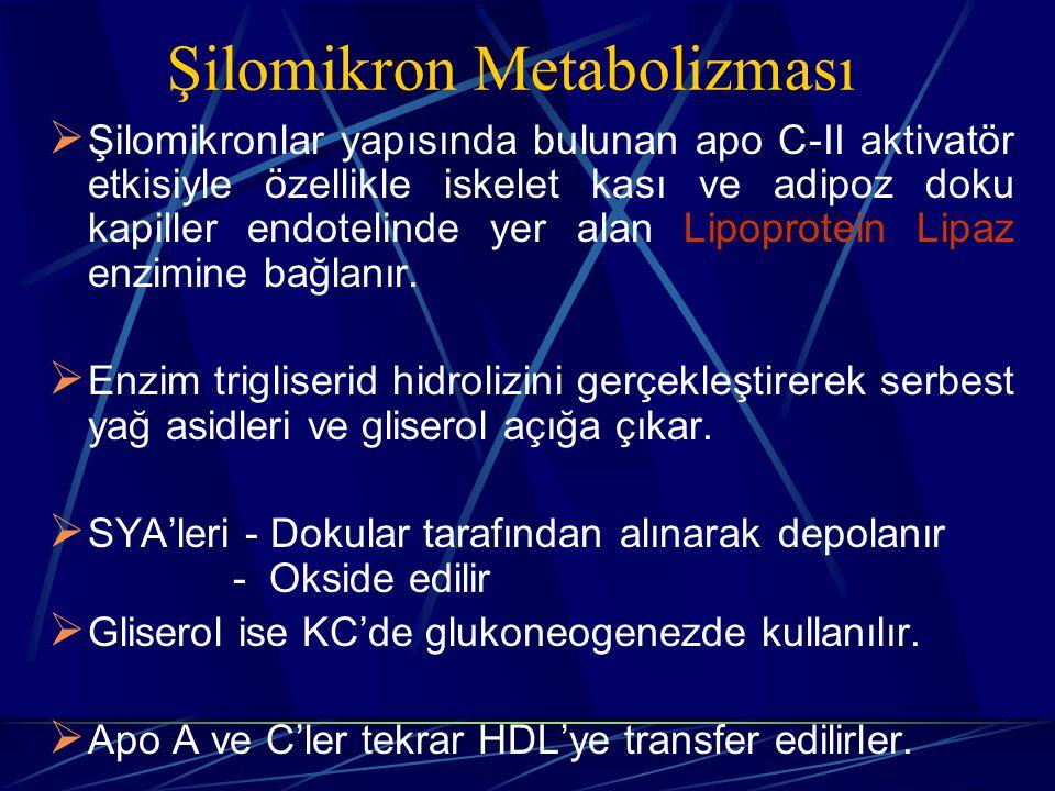 Şilomikron Metabolizması  Şilomikronlar yapısında bulunan apo C-II aktivatör etkisiyle özellikle iskelet kası ve adipoz doku kapiller endotelinde yer