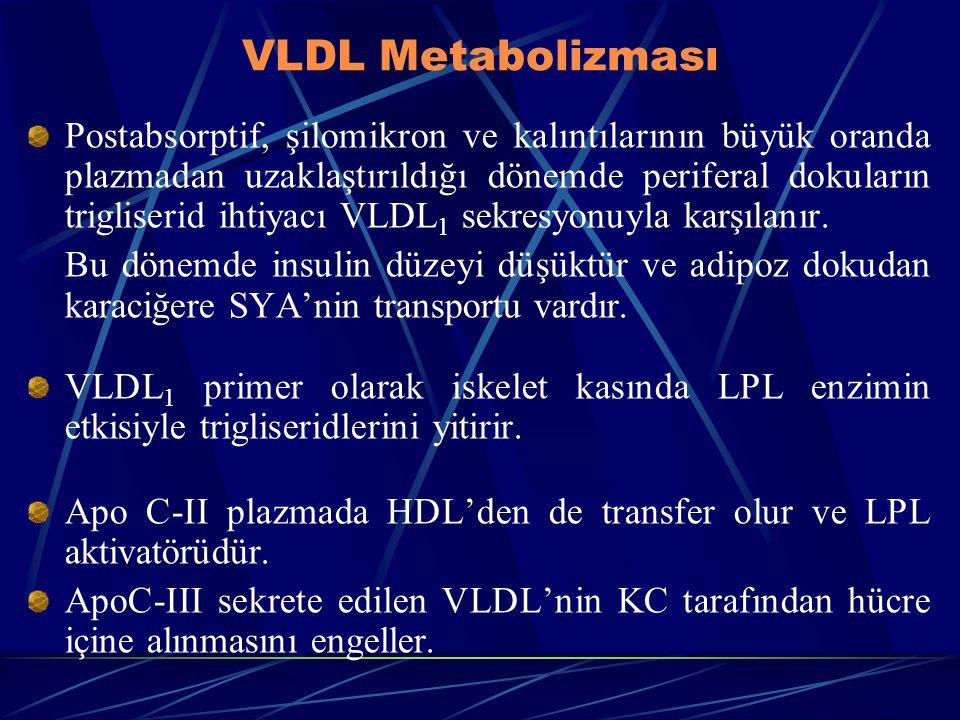 VLDL Metabolizması Postabsorptif, şilomikron ve kalıntılarının büyük oranda plazmadan uzaklaştırıldığı dönemde periferal dokuların trigliserid ihtiyac