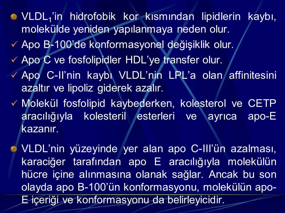 VLDL 1 'in hidrofobik kor kısmından lipidlerin kaybı, molekülde yeniden yapılanmaya neden olur. Apo B-100'de konformasyonel değişiklik olur. Apo C ve