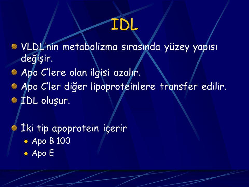 IDL VLDL'nin metabolizma sırasında yüzey yapısı değişir. Apo C'lere olan ilgisi azalır. Apo C'ler diğer lipoproteinlere transfer edilir. IDL oluşur. İ