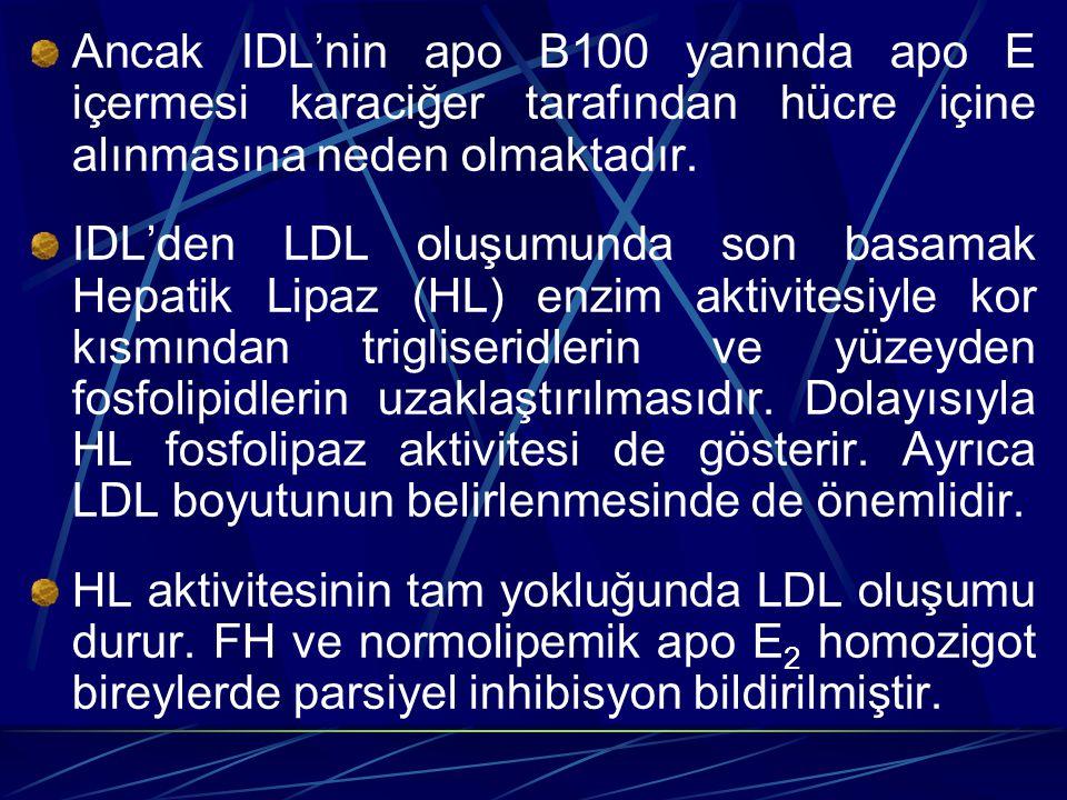 Ancak IDL'nin apo B100 yanında apo E içermesi karaciğer tarafından hücre içine alınmasına neden olmaktadır. IDL'den LDL oluşumunda son basamak Hepatik