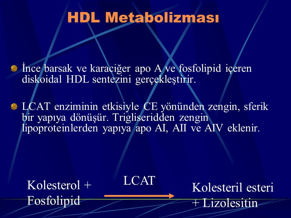HDL Metabolizması İnce barsak ve karaciğer apo A ve fosfolipid içeren diskoidal HDL sentezini gerçekleştirir. LCAT enziminin etkisiyle CE yönünden zen