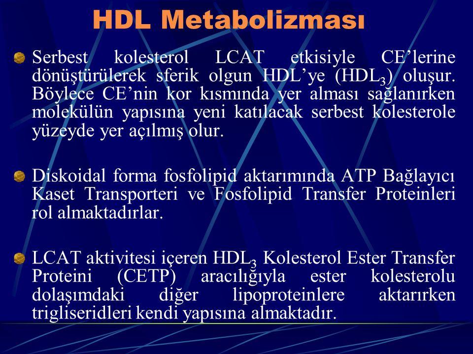 HDL Metabolizması Serbest kolesterol LCAT etkisiyle CE'lerine dönüştürülerek sferik olgun HDL'ye (HDL 3 ) oluşur. Böylece CE'nin kor kısmında yer alma
