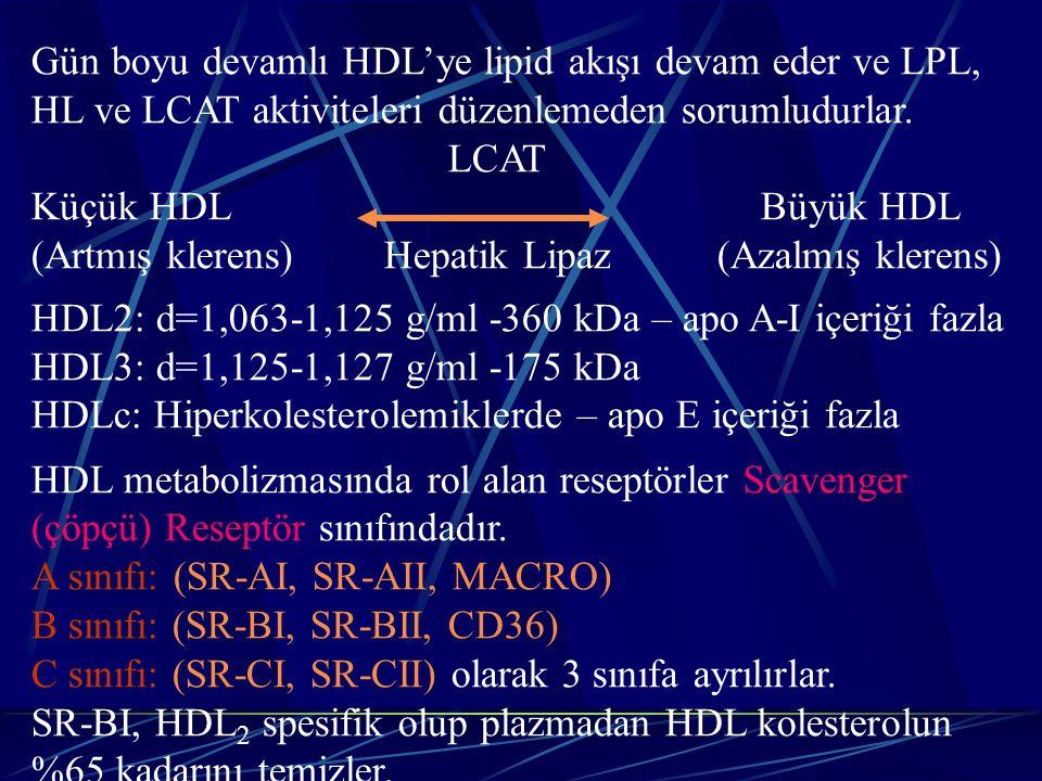 Gün boyu devamlı HDL'ye lipid akışı devam eder ve LPL, HL ve LCAT aktiviteleri düzenlemeden sorumludurlar. LCAT Küçük HDL Büyük HDL (Artmış klerens) H
