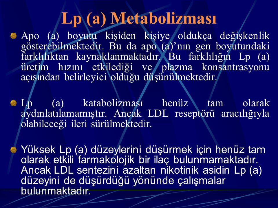 Lp (a) Metabolizması Apo (a) boyutu kişiden kişiye oldukça değişkenlik gösterebilmektedir. Bu da apo (a)'nın gen boyutundaki farklılıktan kaynaklanmak