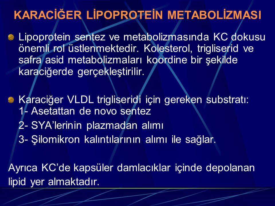 KARACİĞER LİPOPROTEİN METABOLİZMASI Lipoprotein sentez ve metabolizmasında KC dokusu önemli rol üstlenmektedir. Kolesterol, trigliserid ve safra asid