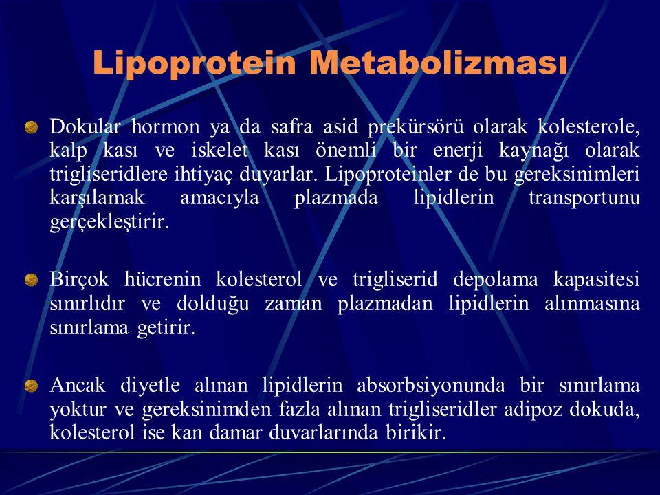 Lipoprotein Metabolizması Dokular hormon ya da safra asid prekürsörü olarak kolesterole, kalp kası ve iskelet kası önemli bir enerji kaynağı olarak tr