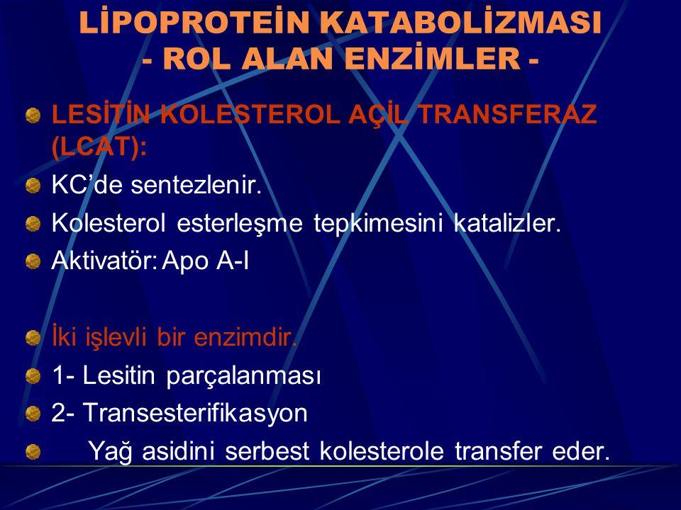 LİPOPROTEİN KATABOLİZMASI - ROL ALAN ENZİMLER - LESİTİN KOLESTEROL AÇİL TRANSFERAZ (LCAT): KC'de sentezlenir. Kolesterol esterleşme tepkimesini katali
