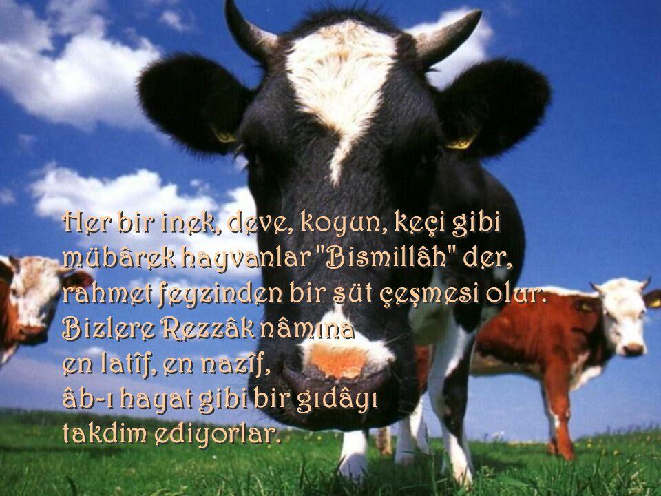 Her bir inek, deve, koyun, keçi gibi mübârek hayvanlar