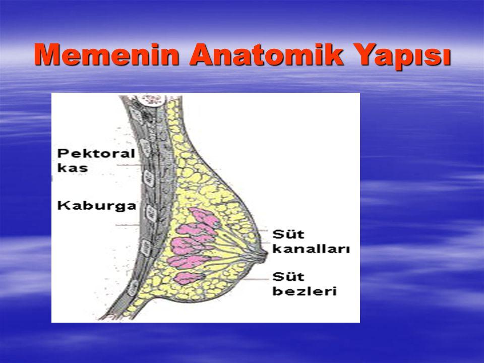 Memenin Anatomik Yapısı