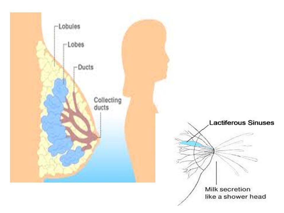Meme kitlelerinin nedenleri Normal nodülarite…yağ lobülleri, öne çıkık kaburga İnflamatuar..abseler, yağ nekrozu Sık benign değişiklikler..fibroadenomlar, kistler, galaktoseller Benign tümörler..duktus papillomaları,lipomlar Malign..karsinoma in situ, primer ve sekonder kanserler Deri lezyonlar..