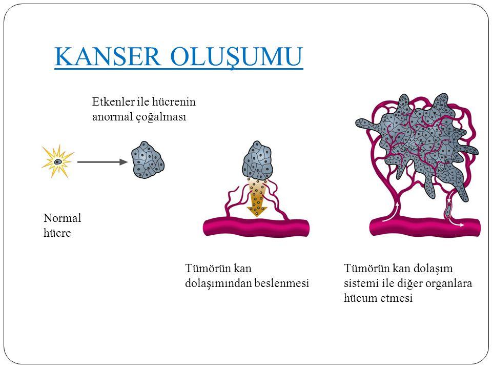 KANSER OLUŞUMU Normal hücre Etkenler ile hücrenin anormal çoğalması Tümörün kan dolaşımından beslenmesi Tümörün kan dolaşım sistemi ile diğer organlar