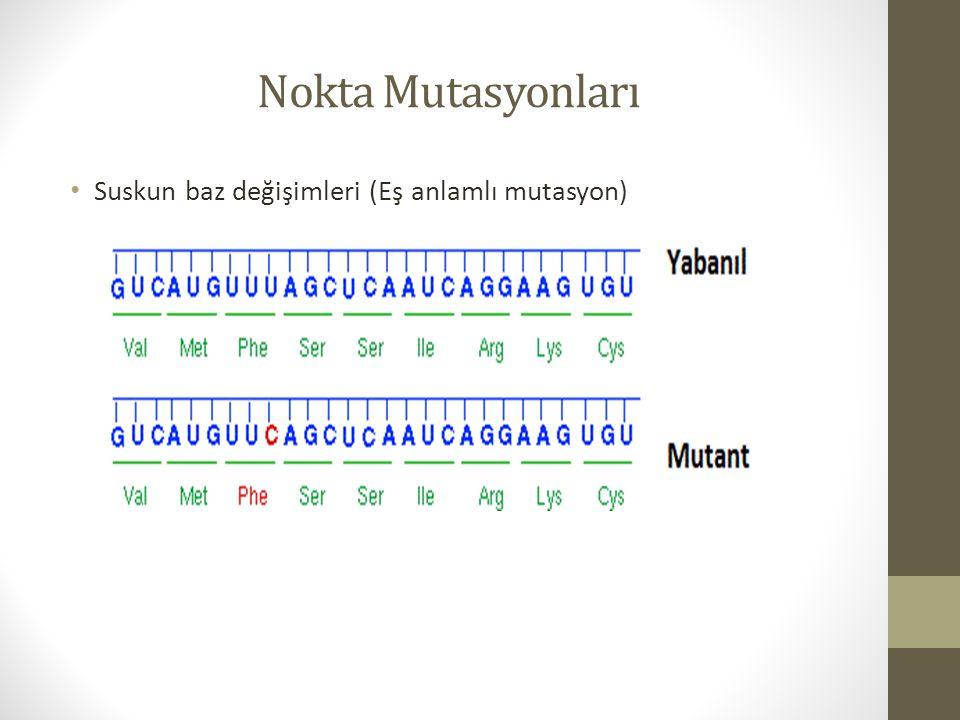 Nokta Mutasyonları Suskun baz değişimleri (Eş anlamlı mutasyon)