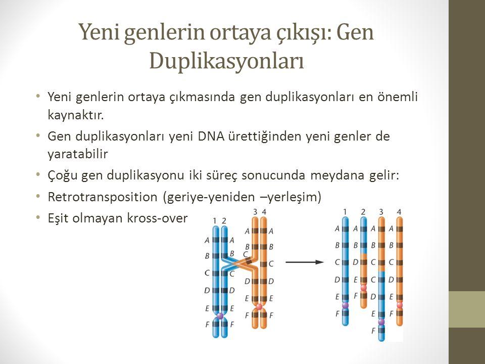 Yeni genlerin ortaya çıkışı: Gen Duplikasyonları Yeni genlerin ortaya çıkmasında gen duplikasyonları en önemli kaynaktır. Gen duplikasyonları yeni DNA